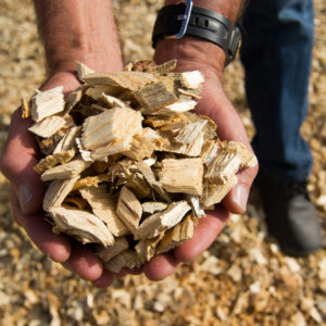 SOHNGEN: Biomass Energy From Forests Can Be Sustainable and Carbon Neutral
